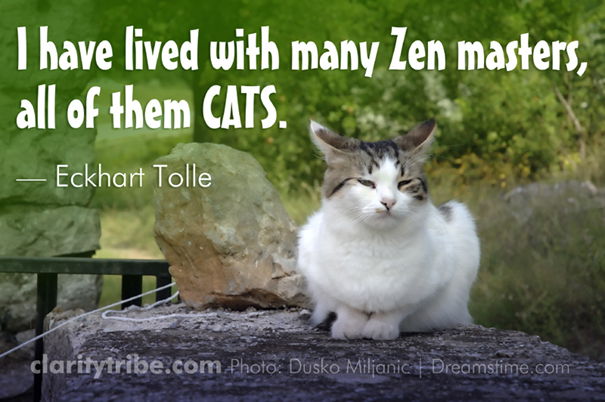 I have lived with many Zen masters, all of them CATS.